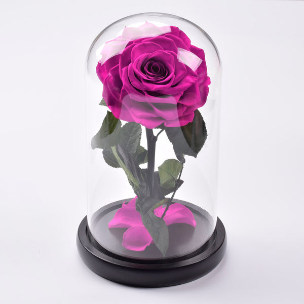 Beauty and The Beast Preserved Large Rose Dome - Lasts 5 Years