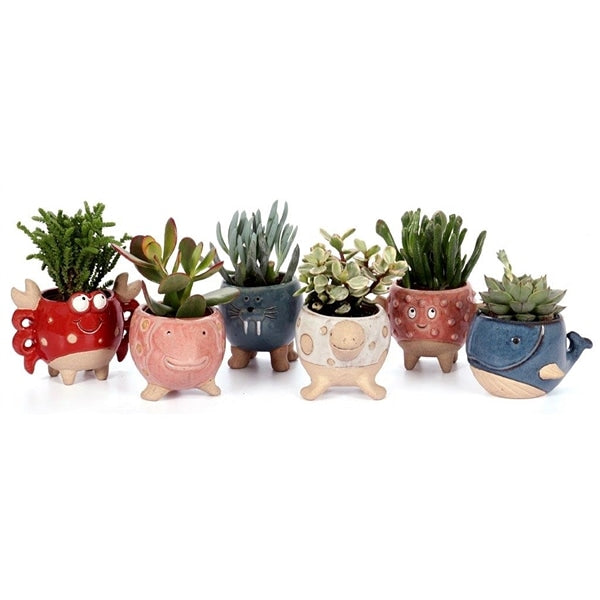 Succulents in sea creatures pots set of 6 - Cambridge Bee
