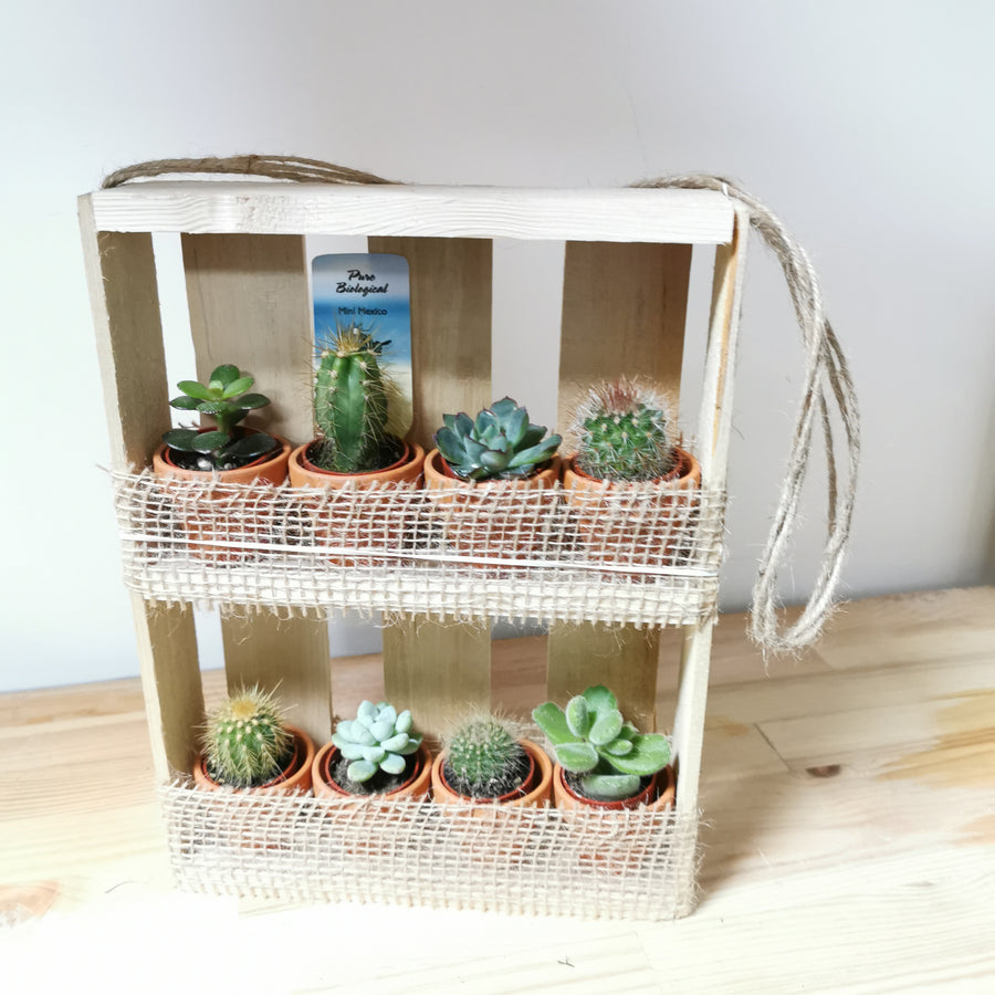 Set of 8 succulent plants in a hanging box - Cambridge Bee