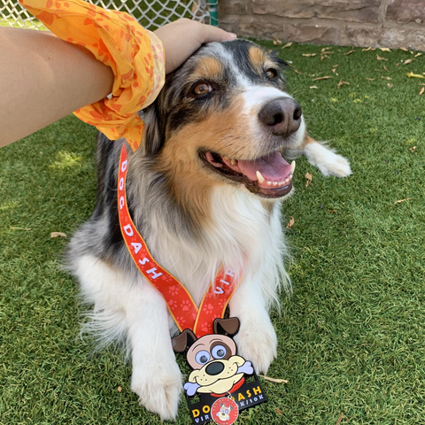 A dog wears the medal for the virtual run smiling