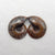Ammonite Fossil Earrings Stone Pair stone for earrings making, 28x23x7mm, 12.4g