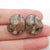 Natural Ammonite Fossil Cabochon Pair, 18x15x5mm, 4.5g