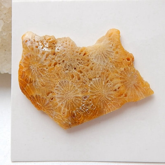 Natural Indonesian Fossil Coral Gemstone Cabochon, 30x25x4mm, 3.6g - MyGemGarden