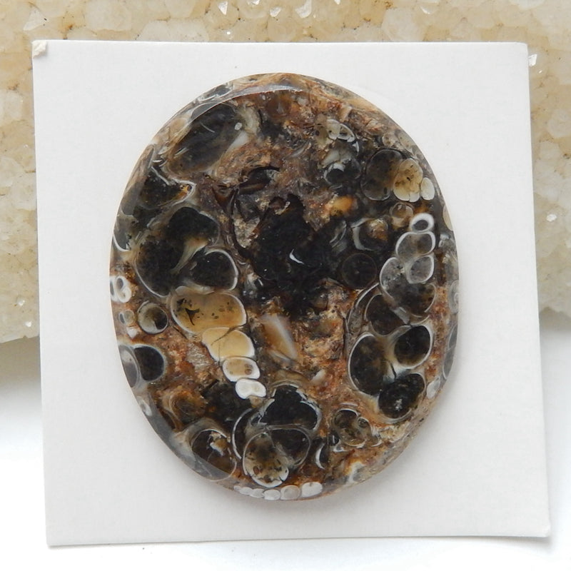Natural Ammonite Fossil Oval Gemstone Cabochon, 33x27x4mm, 6.5g - MyGemGarden