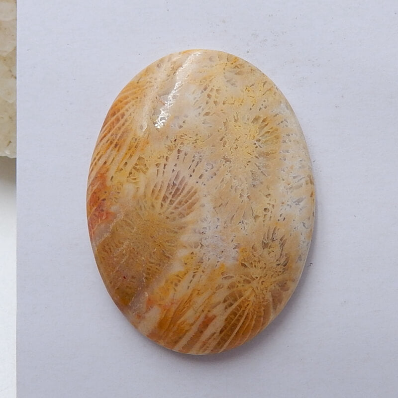 Natural Indonesian Fossil Coral Oval Gemstone Cabochon, 40x30x7mm, 12.9g - MyGemGarden