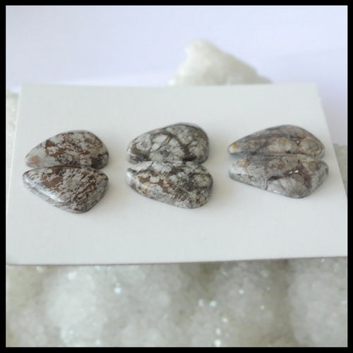 3Pairs Natural Commonite Gemstone Cabochon Pair, 20x10x5mm,17x12x5mm,7.35g - MyGemGarden