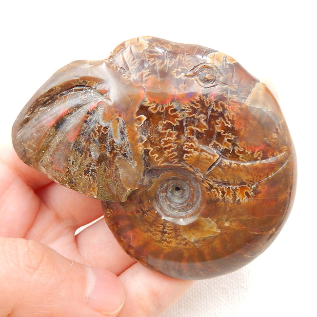 Natural Stone Ammonite Fossil Gemstone Carved Elephant Shape Cabochon, 70x57x20mm, 93.8g