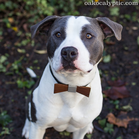 Reno: dogs in ties