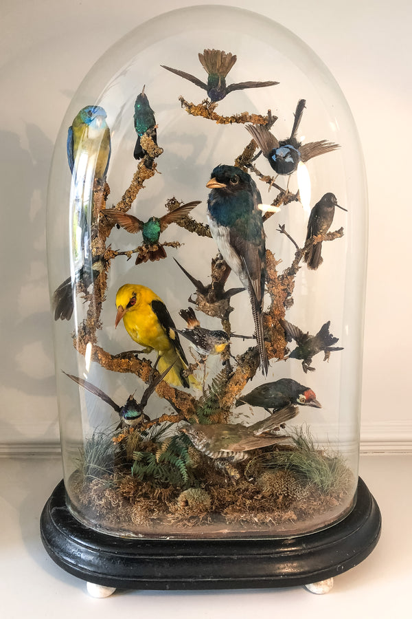 A remarkable mid-19th century early Victorian taxidermy bird diorama
