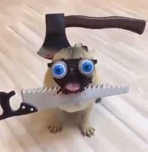 Funny Dress Up for Pet