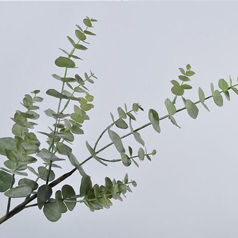 Leaf Spray Eucalyptus Green