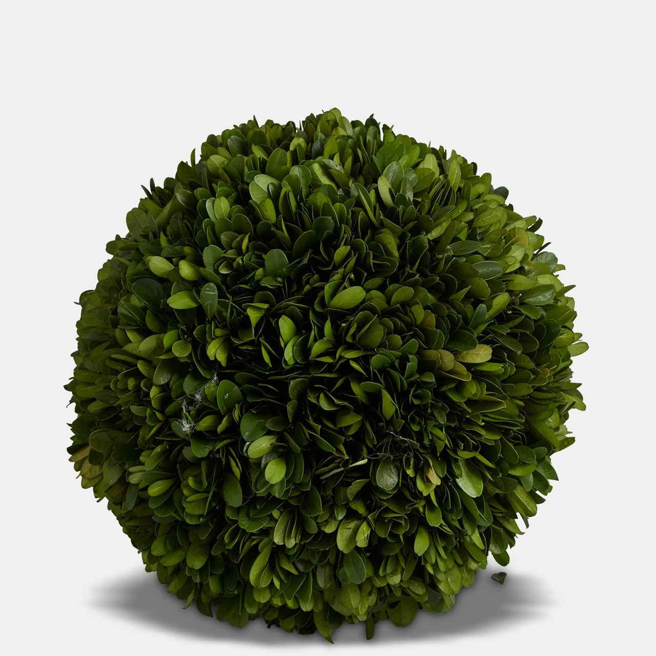 Topiary Ball 25cm