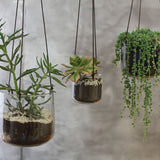 Viri Hanging Planter Clear MED