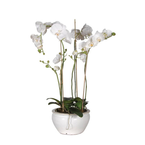 Orchid in White Bowl