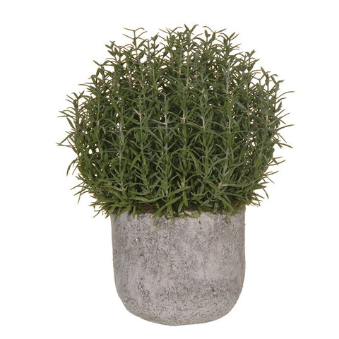 Rosemary Bush Ball in Grey Cement Pot