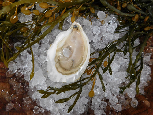 Signature Moondancer Oysters