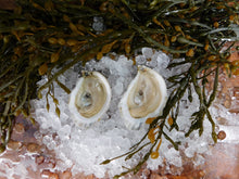 Load image into Gallery viewer, Petite Moondancer Oysters