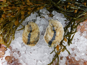 Petite Moondancer Oysters