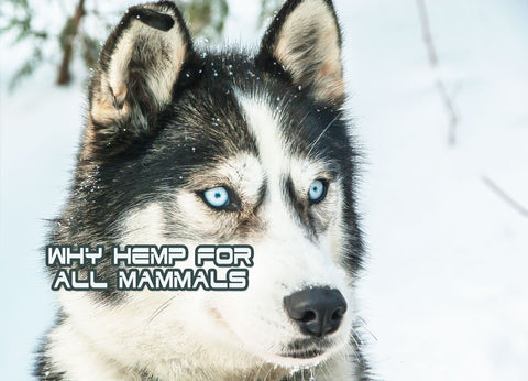 Dogs-cats-CBD-Pure-Relief-Nano-CBD-For-All-Mammals-Hemp-Oil-Can-Change-The-World