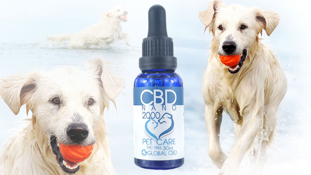 CBD for dogs and cats no thc wholesale, retail and free shipping Pet Care Nano Drops