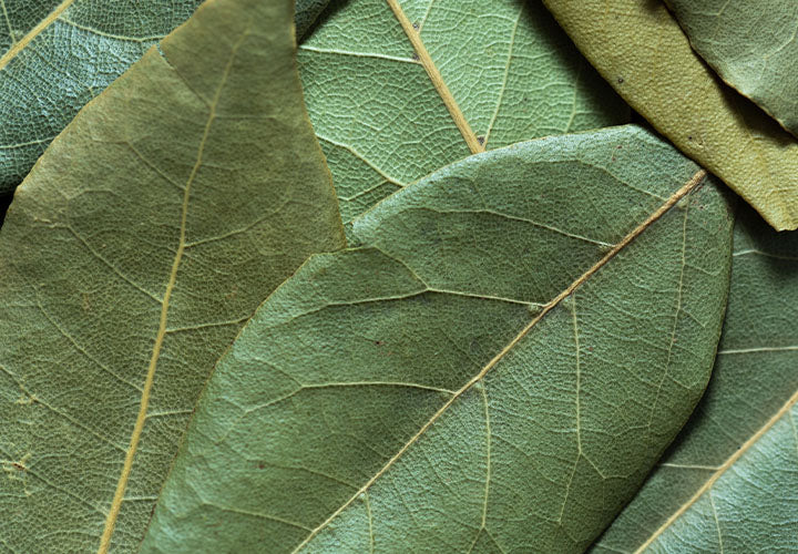 Close up photo of dried bay leaves for cooking.