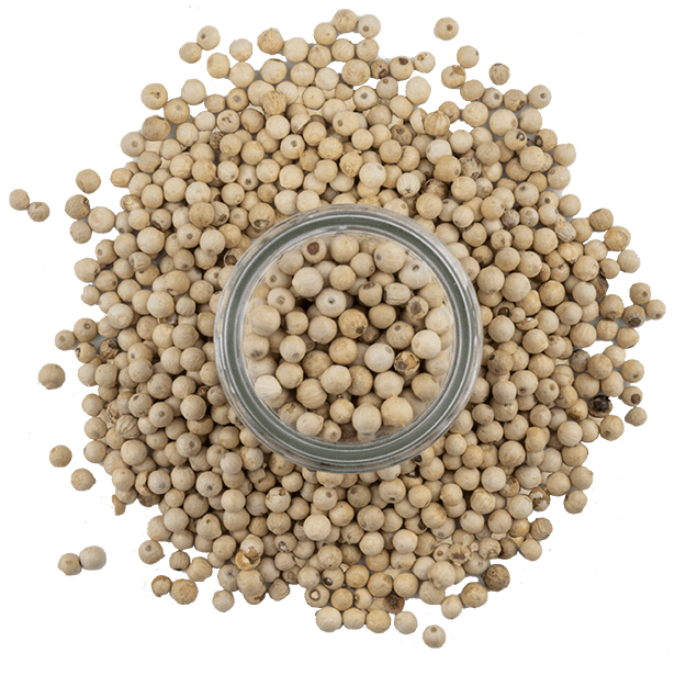 white-peppercorns-3.png|algolia