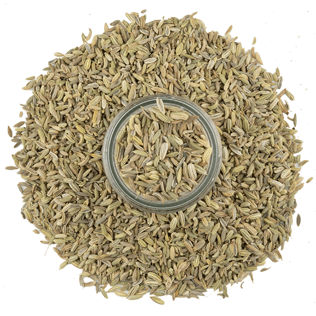 fennel-seeds-3.png|algolia