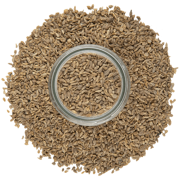 anise-seeds-3.png|algolia
