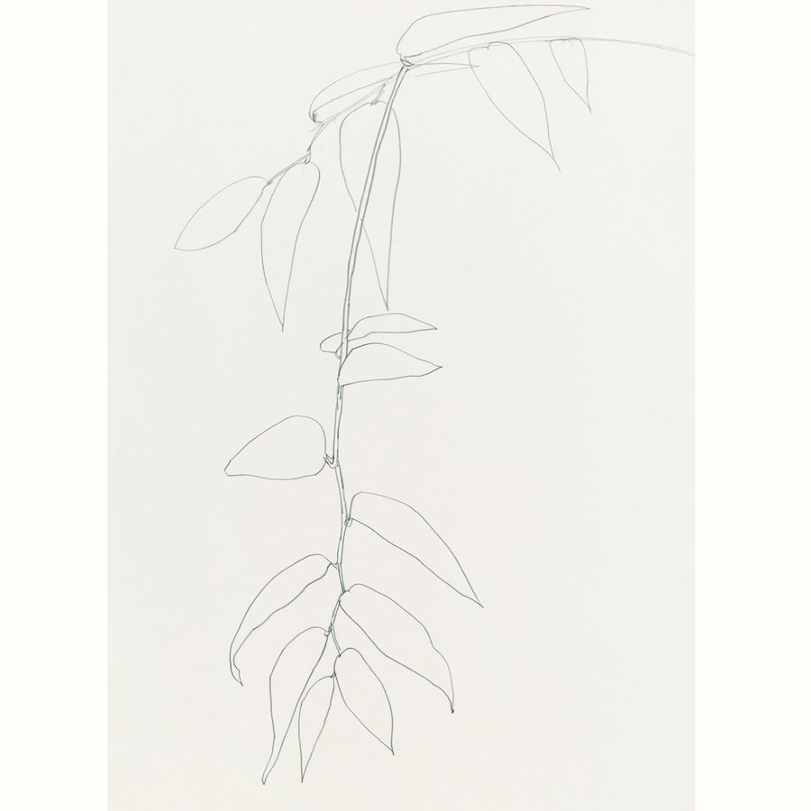 Plant Life Drawing Workshop inspired by Ellsworth Kelly