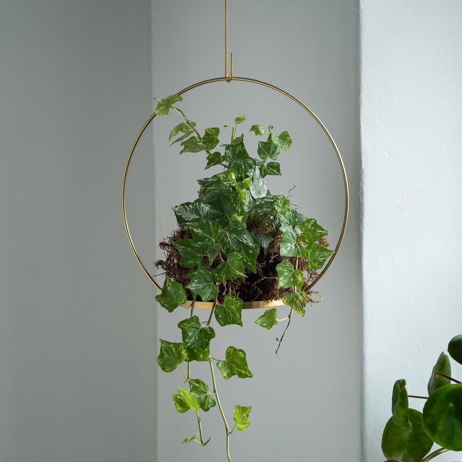 Small Brass Circle Hanging Plant Podium