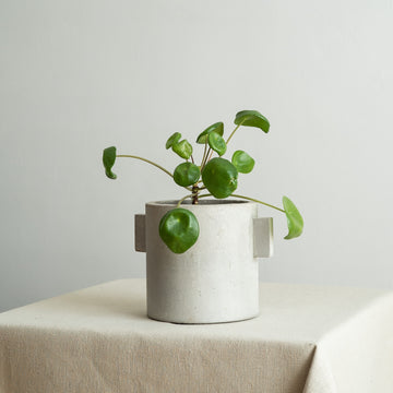 Small Concrete Plant Pot with Handles