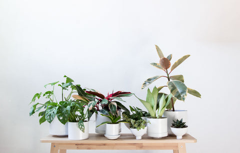 Our Plant Collection