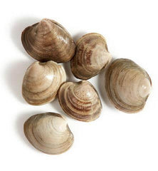 LITTLE NECK CLAMS FROM USA