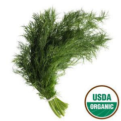 ORGANIC DILL FROM MEXICO