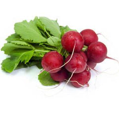 ORGANIC RADISHES FROM USA
