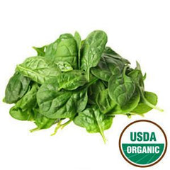 ORGANIC SPINACH BUNCH FROM USA