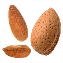 ROASTED SHELLED ALMONDS