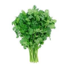 CILANTRO FROM USA