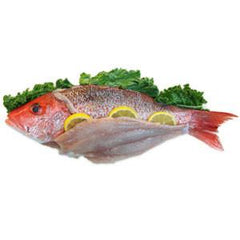 RED SNAPPER FILLET FROM USA