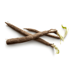 SALSIFY FROM MEXICO