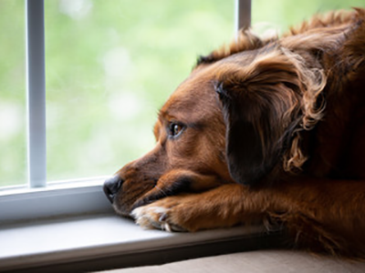 How to Help Pets Adjust to Life After Quarantine