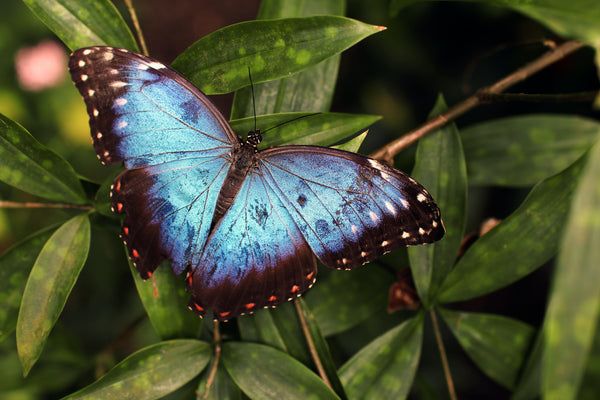 Keep your butterfly garden pesticide free, so you don't accidentally hurt them.