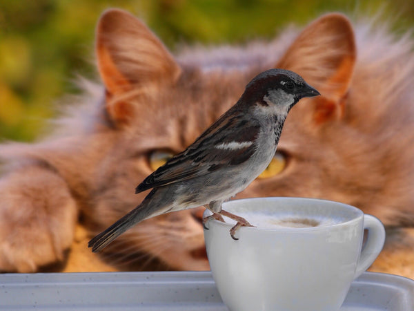 If you want to attract birds to your garden, you'll have to keep away their natural enemies!
