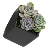Cube Wall Planter, Glossy Series