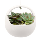 Basket Air Planter, Matte Series