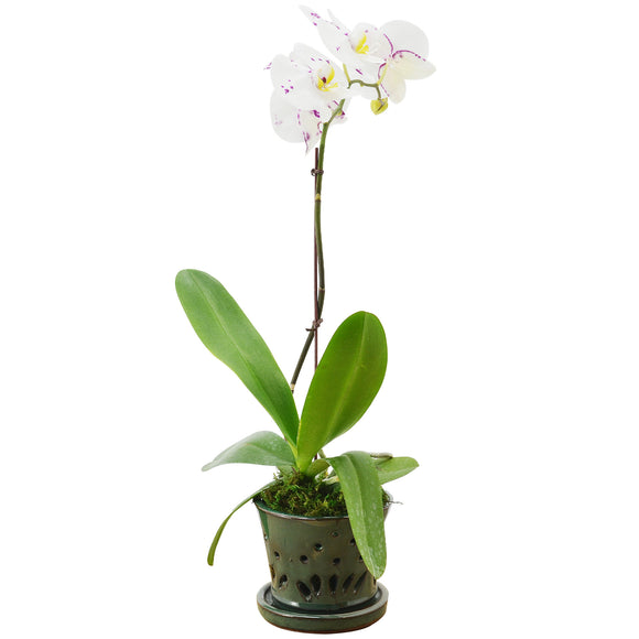Floral Pattern Orchid Planter