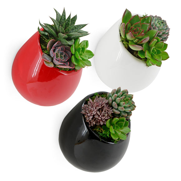 Round Wall Planter, Glossy Series