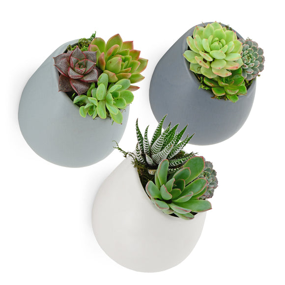 Round Wall Planter, Matte Series