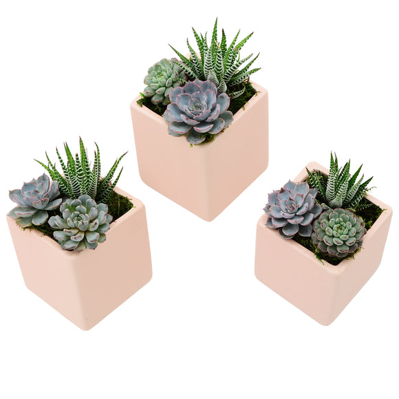Cube Wall Planter 3-Pack, Pastel Series
