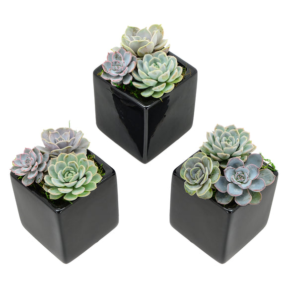 Cube Wall Planter 3-Pack, Glossy Series